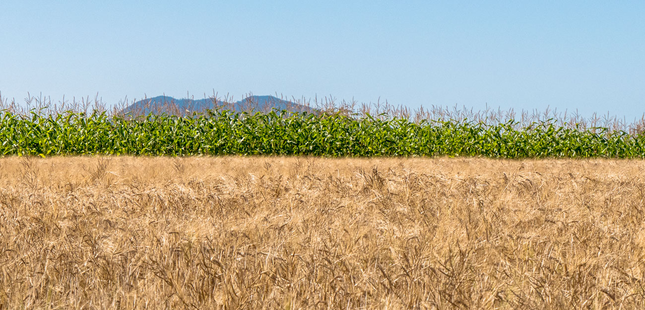 the grain revolution